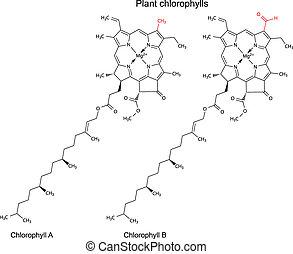 Plant pigments chlorophylls