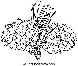Plant Pinus bungeana