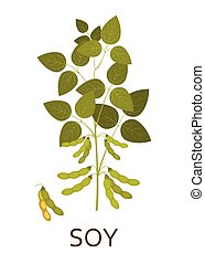 plant, pods., illustration., bladeren, vector, soy
