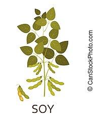 plant, pods., illustration., bladeren, vector, soy