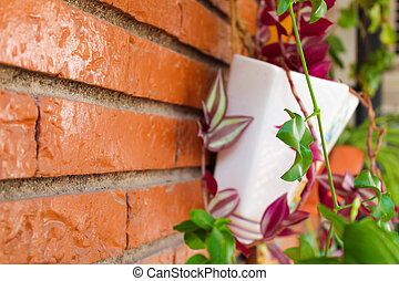 Plant Pot in the Wall