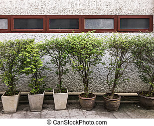 Plant pot row in front of the old office building wall.
