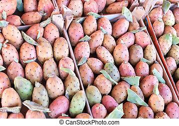 Plant Prickly pear cactus