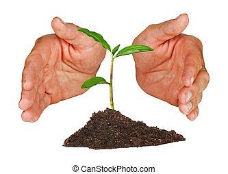 Plant protected by hands