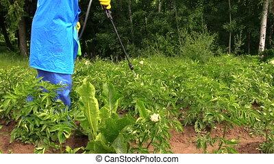 plant protection garden - gardener man spraying vegetables...