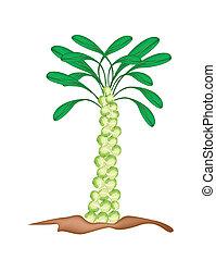 plant, prouts, achtergrond, fris, witte , brussel