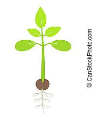 Green plant seedling. Vector illustration