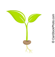 Plant seedling - Little plant seedling. Vector illustration