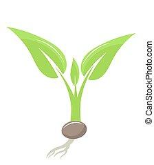 Plant seedling. Vector illustration