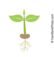 Plant seedling with roots