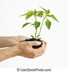 plant., segurar passa