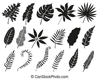 plant, set, blad, palmen, iconen, bladeren, vrijstaand, varenblad, tropische , silhouettes, vector, palm, monstera, fronds, silhouette.