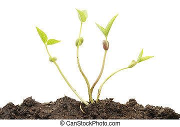 Plant shoots - Tender young plant shoots in soil against a...