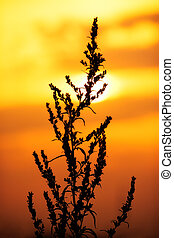 Plant silhouette on sunset background