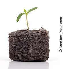 plant sprout isolated