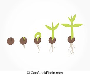 plant, stadia, zaad, germination