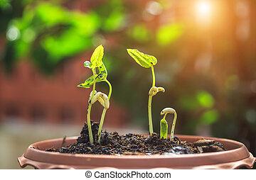 plant, terrein, jonge, bonen, achtergrond, verdoezelen