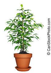 plant, thuis, flowerpot.