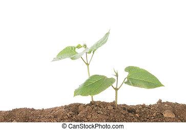 plant, twee, seedlings