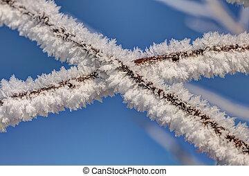 hoarfrost in winter day