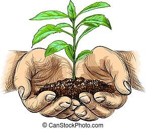 plant, vasthouden, palmen, spruit, schets, jonge, stijl, achtergrond, vrijstaand, witte , hands., grond