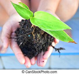 plant, vasthouden, terrein, op, groene, menselijke handen, afsluiten, fris