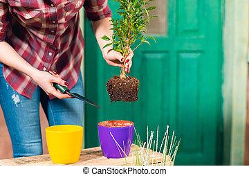 plant, vrouw, gedeeltelijk, terrein, pot, close-up, het verwijderen, aanzicht