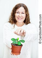plant, vrouw, groene, jonge, bedekking
