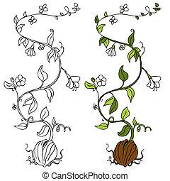 plant, wijnstok