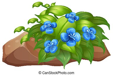 Plant with blue flowers on white background