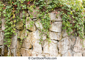 plant with leaves on the wall