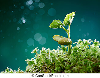plant with moss