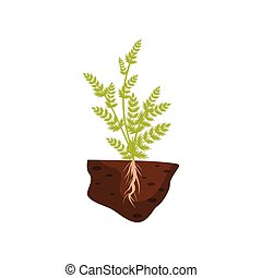 Plant with small leaves on high stems. Root system in the soil. Vector illustration.