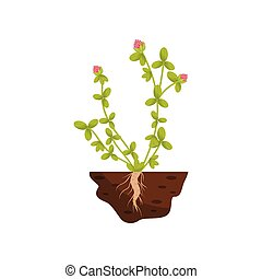 Plant with small leaves, pink fluffy flowers. Vector illustration.