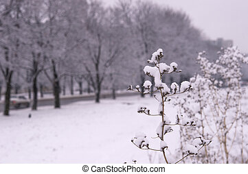 Plant with snow in the park in wint