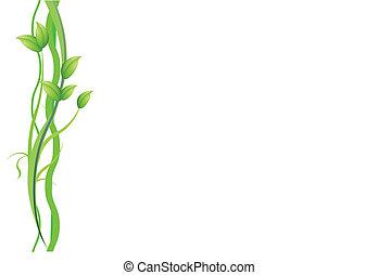 plant, witte achtergrond