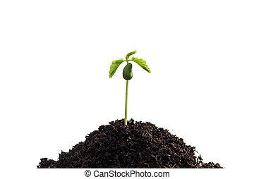 plant, witte achtergrond, jonge