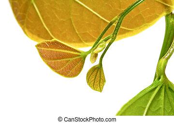 plant, witte , groene, jonge, achtergrond