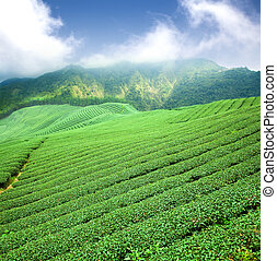 plantação, chá, verde, nuvem, ásia