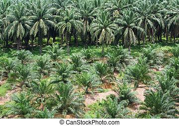 plantação, palma óleo
