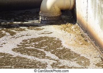 planta água, desperdício, sujo, esgoto