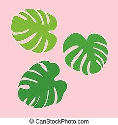 planta, árvore, folhas, tropicais, palma, monstera