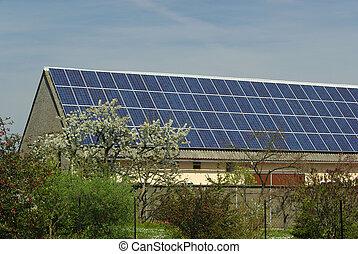 planta, 37, solar