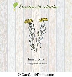 planta, aceite, aromático, etiqueta, helichrysum, esencial