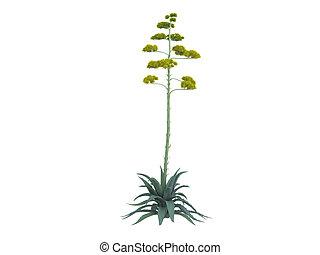 planta, agave, ou, americana, século