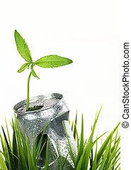 planta, aluminio, verde, lata, mojado, crecer, pasto o césped