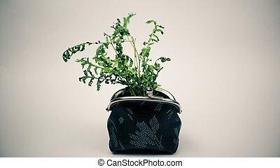 planta, bolsa, verde, crescendo, dinheiro, conceito