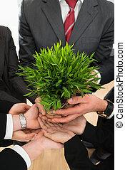 planta, businesspeople, segurar passa