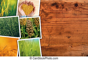 planta, collage, foto, cereal, agricultura, agricultura