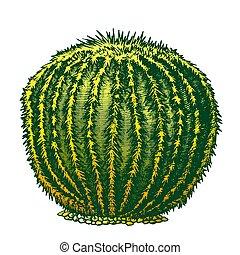 planta, color, mano, vector, tinta, dibujado, cacto,...